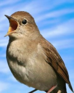 nightingale-are-singing